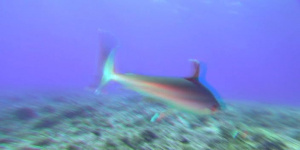 Большое путешествие вглубь океанов / OceanWorld. 3D. 2009.  DVDRip