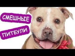 Самые смешные животные Приколы 2017 про собак Собаки и Кошки питомцы и домашние животные cute dogs