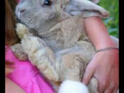 Новый 2011 год белого кролика