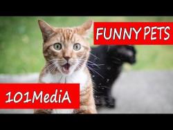 Самые СМЕШНЫЕ ЖИВОТНЫЕ ПРИКОЛЫ 2017 КОТЫ КОШКИ СОБАКИ ТИГРЫ И МОПС funny cats & dogs позитив и смех