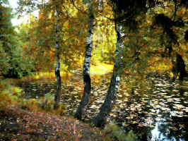 Осени краски