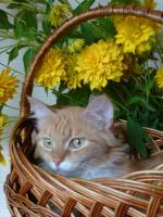Солнечный котик.