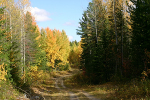 По лесной дороге...