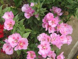 цветы2010г. 059