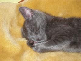 Крошка спит, она устала