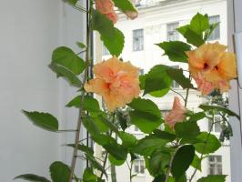 обильное цветение июля 2009