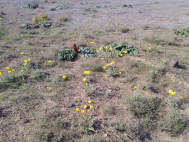 и в пустыне растут цветы...