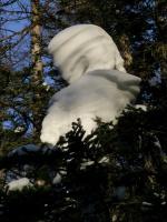 Свет и тени зимнего леса-3