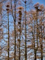 Гнездовья в Летнем парке