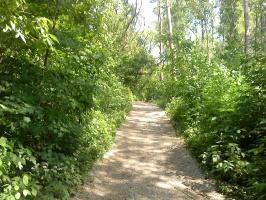 красота курских лесов