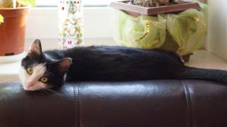 На диванчике