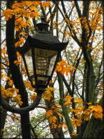 Дождь...улица... фонарь...