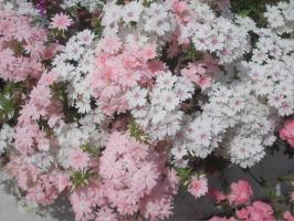 Городские цветы-2