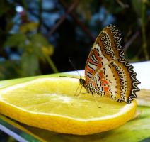 Завтрак бабочки :)