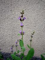 Что это цветет?