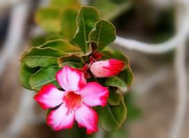 Чудесное цветение