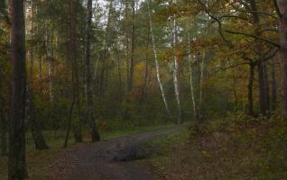 «Мелькает желтый лист по зелени деревьев».