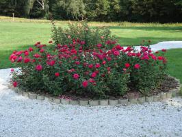 Клумбы роз
