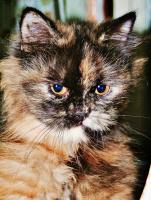 1 марта , Международный день кошек  !