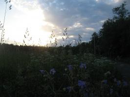 Вечерний пейзаж-1