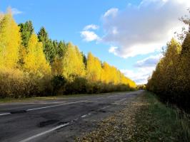 Дорога в Пучеж от воронцовских красот и грибов.