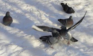 танцы на снегу