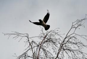 Почти орел ....