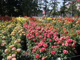 Решётка сада, выходящая на улицу Сурганова, георгиновый уголок