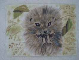 Ёжик.  акварель  (открытка)