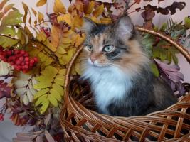 Девушка осень.