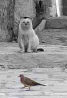 """Кот """"Бывалый"""": """"Цель определена!!!"""""""