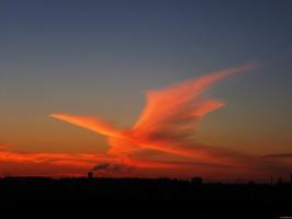 Утренняя жар-птица
