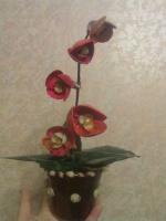 Орхидея из ракушек моими руками