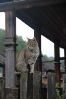 макаракские коты