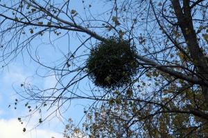 Что это на дереве?