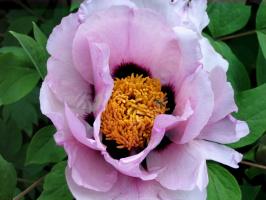 цветёт и пахнет..;-)