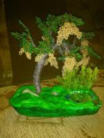 дерево11