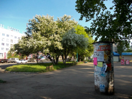 Городские яблони