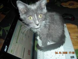 очень любознательный котенок Фунтик