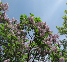 Времена года: весна-1