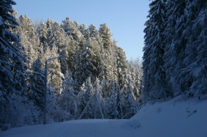 Таёжная лыжня