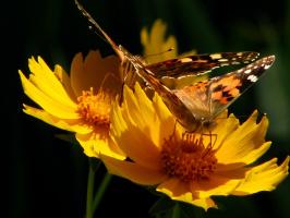 каждому цветку по бабочке...)