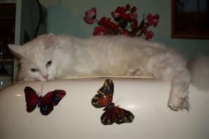 Беня. Бабочки мои, бабулечки