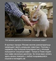 Кошачьи кафе