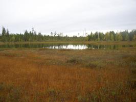Брусничник у озера