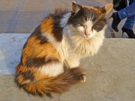 Кошка-богатка возле подземного перехода