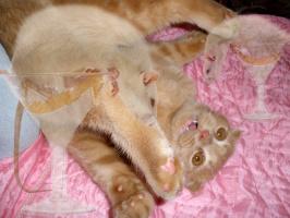 Кот Елисей