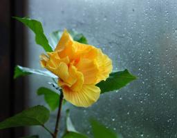 А за окном дождь