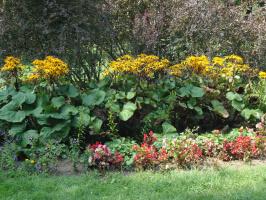 Ещё одна композиция из цветов и кустарников