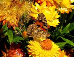 Эта бабочка за Юлечку